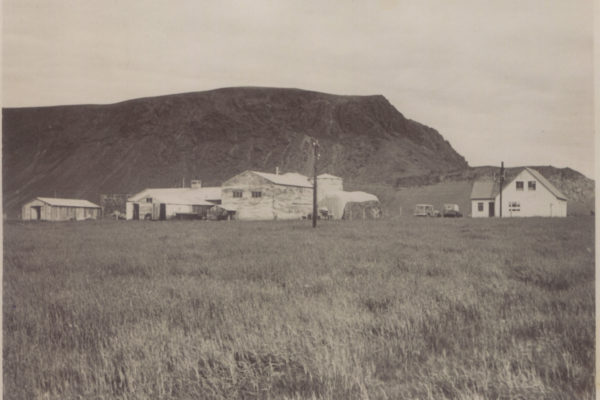 Here you see Hjarðarból around 1965, at that time you would mainly see trees in town
